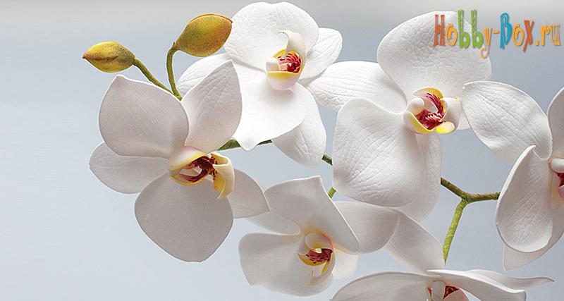 Выкройка орхидеи фаленопсис фото 741